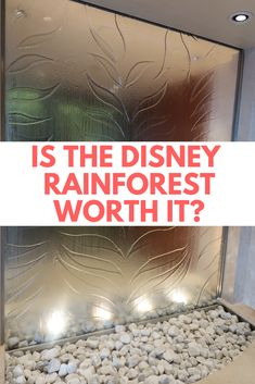 Disney Cruise Tips and Secrets. Is the Disney Cruise Rainforest worth the extra cost. Find out the differences between the Disney Dream and Fantasy from the Disney Wonder and Magic Rainforest. Includes Rainforest pictures and honest review.