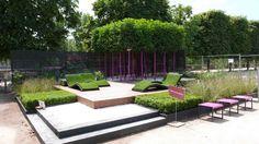beau jardin nécessitant peu d'entretien aménagé avec un groupe de jeunes arbres d'ornement, des buis taillés et des graminées