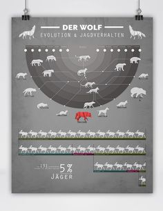 the wolf in origamis style infographic • Der Wolf - Abstammung und Jagdverhalten • The Wolf - Roots and Hunting Behaviour