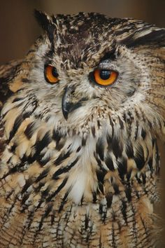 Bengal Eagle Owl | by EdgedFeather
