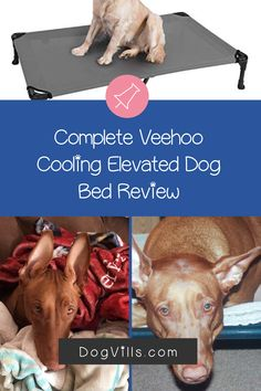 "If you're looking for a complete Veehoo Cooling Elevated dog bed review to decide if it's right for your pup, I've got you covered.    Some elevated dog beds cost upwards of $300 , so when you find one under $50, it's easy to think ""is it really worth it?    ""I've been trying it out with my own dog for about a month now and feel ready to give you a complete overview. Elevated Dog Bed, Cute Dog Collars, Bed Reviews, Sleeping Dogs, Cool Beds, Dog Accessories, Dog Treats, Dog Toys, Small Dogs"