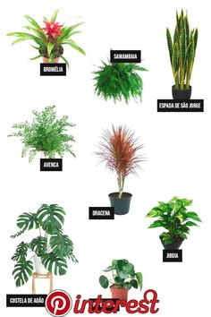 Idea Of Making Plant Pots At Home // Flower Pots From Cement Marbles // Home Decoration Ideas – Top Soop Flower Pot Design, Inside Garden, Bedroom Plants, Snake Plant, Little Plants, Metal Wall Decor, Types Of Flowers, Houseplants, Interior Design Living Room