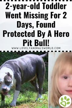 Toddler Went Missing For 2 Days, Found Protected By A Hero Pit Bull! - Lovely Animals World Animal Articles, Interesting Animals, Dog Stories, Bad Feeling, Pit Bull, Rescue Dogs, Year Old, Funny Dogs, Cat Lovers