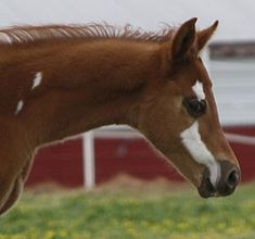 odd facial markings on this foal