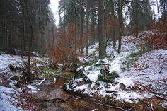 Der kleine Bach - Abfluss - Hasselbach? - zwischen Donoper Teich und Krebsteich. Da lacht das Malerherz und der Naturfreund: Weißer Schnee, rotes Buchenlaub, dunkelgrüner Nadelwald und eine wunderschöne Landschaft!