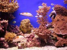Cuidados básicos para mantener el acuario