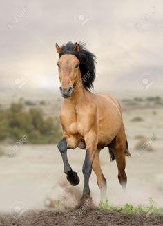 Resultado de imagen para caballos salvajes