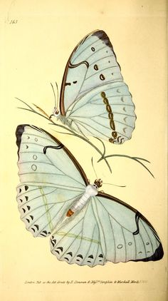 v.4 (1826) - The Naturalist's repository, or, Monthly miscellany of exotic natural history / - Biodiversity Heritage Library