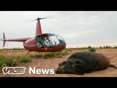 Feral Hogs Are Tearing Up Texas, So Tourists Are Shooting Them from Helicopters Home Documentary, Hunting Pictures, Hog Hunting, Story Of The World, All About Cats, Super Funny, Big And Beautiful, Taking Pictures, Helicopters