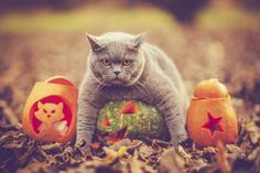 Things That Go Bump in the Night: Tips for Halloween Pet Safety
