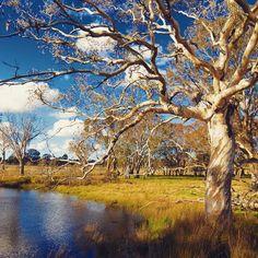 Bushwalking in Canberra, Australia.  http://www.tourhq.com/australia/canberra-tours-guide