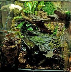 Vivarium with Waterfall - Bing Images Terrariums, Tree Frog Terrarium, Gecko Terrarium, Aquarium Terrarium, Frog Habitat, Reptile Habitat, Reptile House, Reptile Room, Geckos