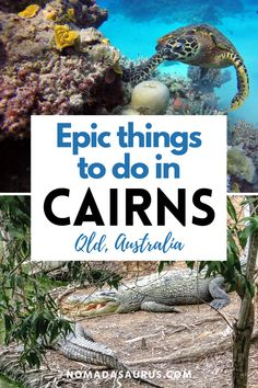 From bungee jumping, scuba diving to seeing one of world's biggest natural wonders the Great Barrier Reef, these are just some of the things to do in Cairns. Attractions in Cairns, Cairns attractions, where to go in Cairns, what to do in Cairns, where to go in Queensland, What to see in Queensland, where to travel in Queensland, what to see in Queensland, where to go in Queensland. #Queensland #Cairns #queenslandaustralia