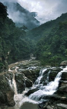 travelingcolors:  In the middle of the jungle | Taiwan (by Hanson Mao)