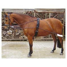 Lunging system - 28400070 - Harry's Horse