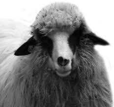 unde m am nascut yo zice petruta dinu Cabana, Lamb, Audi, Animals, Google, Movies, Animales, Animaux, Cabanas