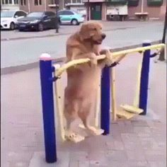 Waiting for owner