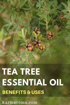 There are so many ways to use tea tree essential oils. I am using it for getting rid of sinus infections.