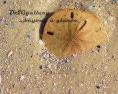 A sand dollar lies nestled in the warm sand a blue and pink shell particles glisten in the sun. This macro photograph shows great texture. by DSGgallery on Etsy