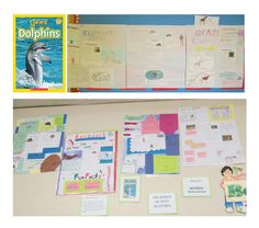 Nonfiction text features inspired by examples in Dolphins by Melissa Stewart. Created by 4th graders at Kennedy School, Billerica, MA