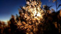 #Amazing #Beautiful #Fantastic #Details #Nature #Sunset #Winter #Sun #Sky #Light #Colorful #Photographer #Photography #Photo #Landscape #Traveler #Pinterest #PinSunset #Great #Shots #Top #Best #PhotoOfTheDay