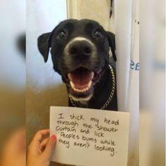Bathroom Break Ins Funniest Dogs