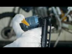 "Check out my new commercial. My co-star was a little temperamental… #Aflac  #AflacDuck ""Duck's DIY Project"" - YouTube"