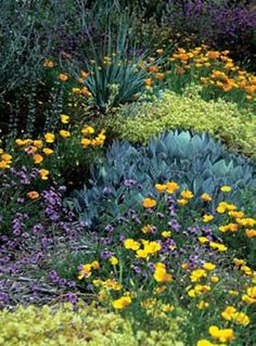 Why It's Great to Garden with Native Plants & How to Find Native Plants // California Native Plants Society Succulents Garden, Planting Flowers, Champs, California Native Garden, Drought Tolerant Landscape, Xeriscaping, The Ranch, Front Yard Landscaping, Dream Garden