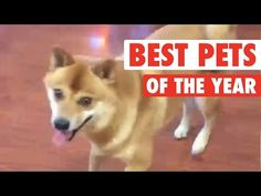 Ultimate Pet Videos of the Year Part 2 || 2015 - YouTube