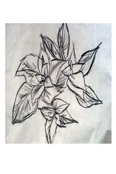 Plant Sketch by AeysheaJones on Etsy, £5.00