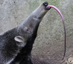 1000+ images about Endangered Animals on Pinterest ...