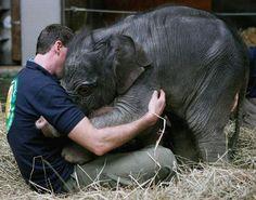 Baby elephants give the best hugs - Imgur
