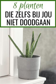 8 planten die niet doodgaan (zelfs niet door jou) #lifestyletips #planten #woonkamer #interieur Big Plants, Indoor Plants, Where The Heart Is, Living Room Inspiration, Cozy House, Family Life, Home Deco, Aloe Vera, House Plants