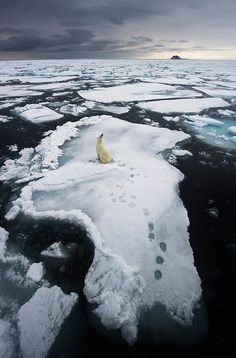 Polar Bear. Wildlife Photographer of the Year Winners. Oct 29, 2012.