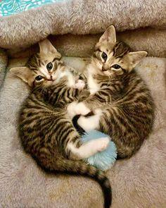 #cat #cats #kitten #catstagram #kitty #catlover #pet #pets #love #cute #animals #animal #petsagram #nature #photo #photography #photooftheday