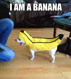 This is bananas!
