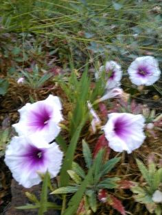 """Check out my art piece """"long-leaf morning glory"""" on crated.com"""