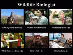 Wildlife Biology princeton best majors