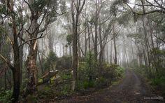 Mount Tomah NSW Australia Blue Mountain, Landscape Photos, Past, Landscapes, Country Roads, Australia, Mountains, Past Tense, Scenery