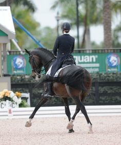 Photo by Meghan Blackburn Wizard danced his way into first in the CDI***** with Adrienne Lyle aboard at the Adequan Global Dressage Festival. | The Chronicle of the Horse