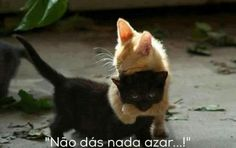 Cute 🐈💕