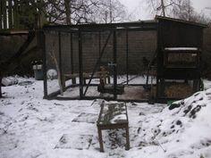 Ud i haven: Byg selv hønsehus