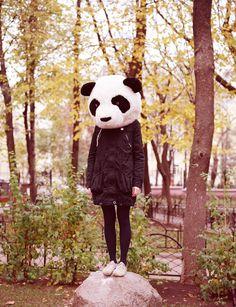 cabeza de panda