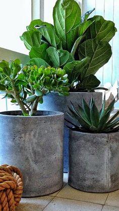Indoor green plants pictures and inspirational deco ideas - Diy Garden Projects Garden Planters, Planter Pots, Diy Cement Planters, Diy Planters Outdoor, Patio Plants, Potted Trees Patio, Outdoor Potted Plants, Potted Bamboo, Cement Flower Pots