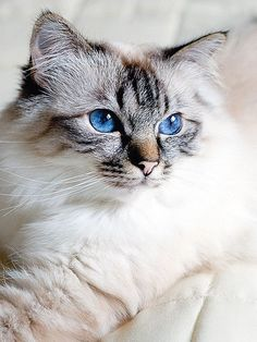 very beautiful eyes