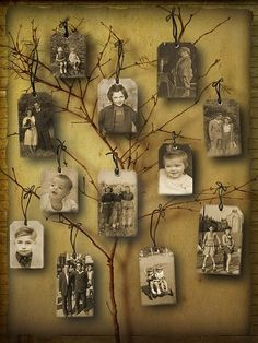 Family tree?  I love how the branches look like gift tags are hanging from them ~ a different way to hang photos