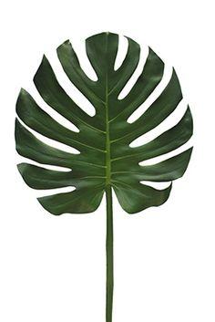 CFD : Catalog > PLANTS/GREENERY > Tropical Greenery