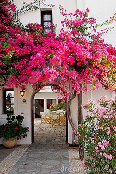 A pink flowering vine ( Bougainvillea ) welcomes visitors to this Spanish style home. Love how it curves over the archway, leading you to the courtyard. Beautiful Gardens, Beautiful Flowers, Beautiful Places, Colorful Flowers, Nice Flower, Hot Pink Flowers, Colorful Garden, Stunningly Beautiful, Beautiful Homes