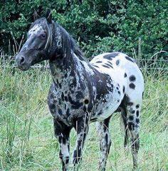 A Beautiful Horse Pretty Horses, Beautiful Horses, Animals Beautiful, Animals And Pets, Cute Animals, Horse Coat Colors, Horse Markings, American Saddlebred, American Quarter Horse