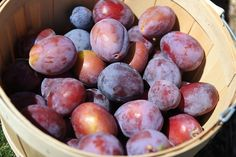 Sarah Browning: Dormant season time to prune fruit trees Vegetable Planters, Container Gardening Vegetables, Vegetable Garden, Prune Fruit, Fruit Benefits, Iron Rich Foods, Outdoor Food, Prunus, Organic Vegetables